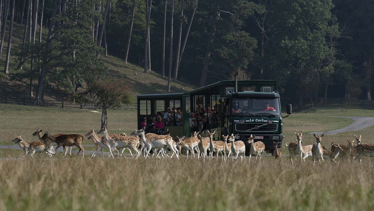 Wildlife Park ~ Safari-bus